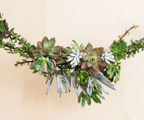 Day 8:  Succulents in Holiday Decor
